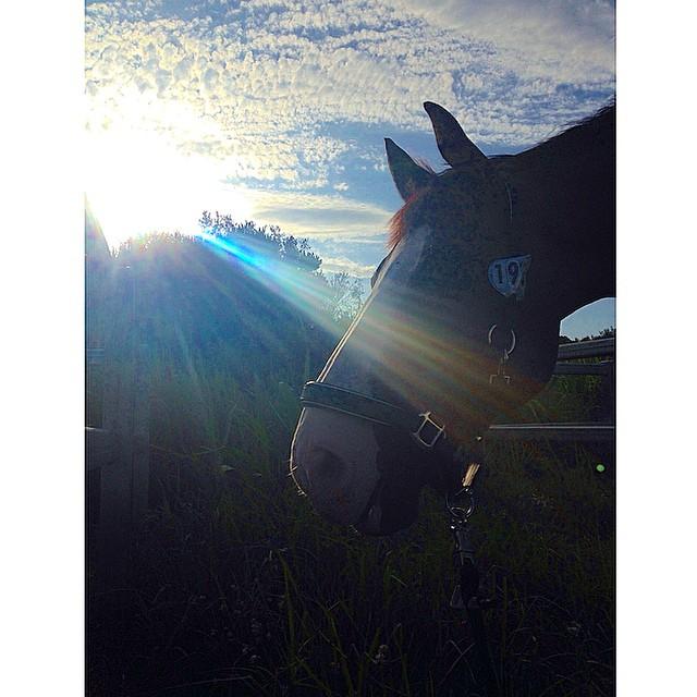 Mendy enjoying his morning walks at boneo #mendymoo #vehcrew - from Instagram